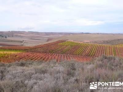 Enología en Rioja - Senderismo Camino de Santiago; senderismo en leon